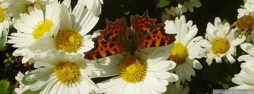 Butterfly Facebook Timeline Profile Cover