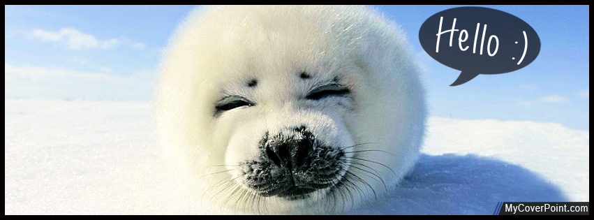 Cute Baby Seal Facebook Timeline Cover