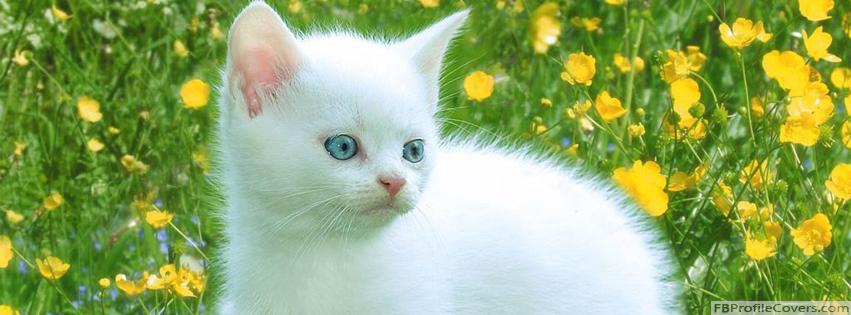 Cute White Cat Facebook Cover