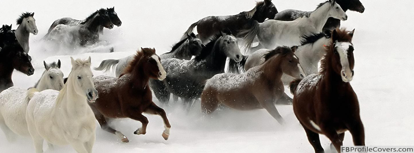 Running Horses Facebook Timeline Cover