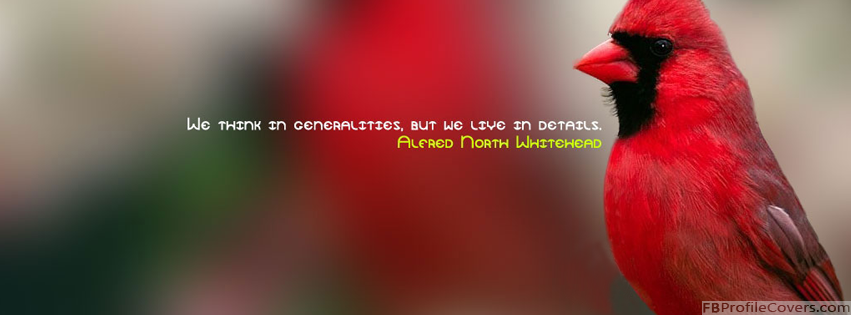 We Live In Detail Facebook Cover