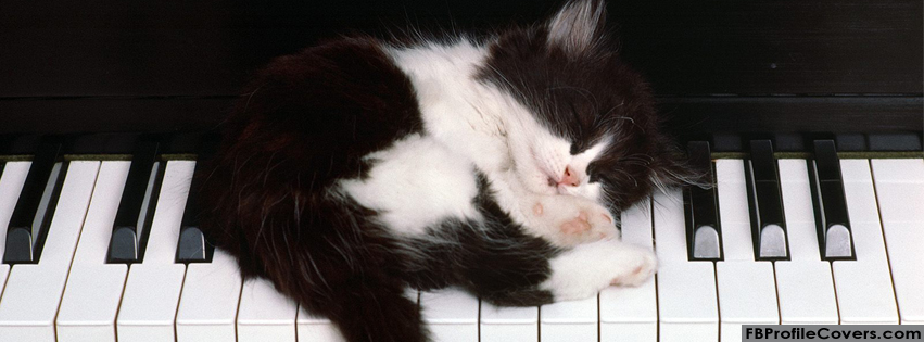 Cat and Piano Facebook Timeline Cover