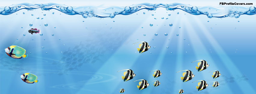 underwater fishes facebook timeline profile cover
