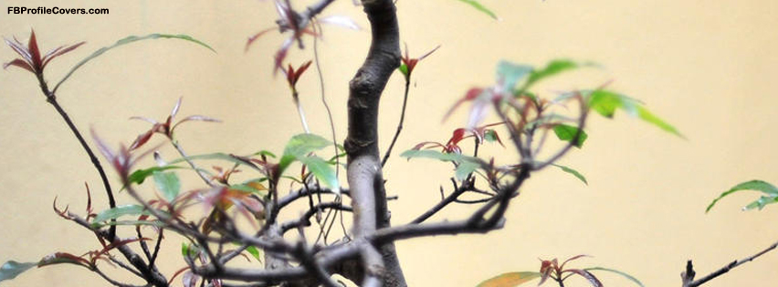 hanoi tree facebook timeline profile cover
