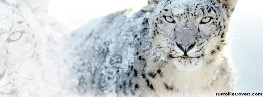 snow leopard facebook timeline covers